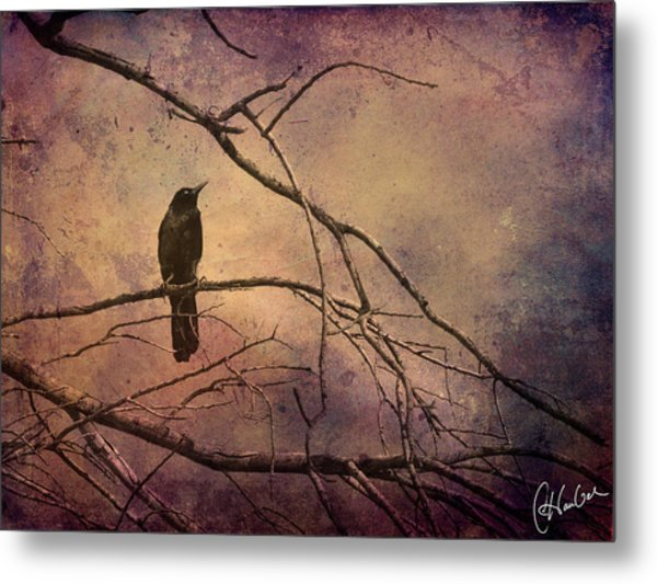 Blackbird 2 Metal Print by Christine Hauber