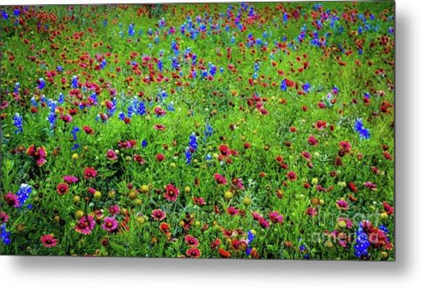 Blooming Wildflowers 537 Metal Print