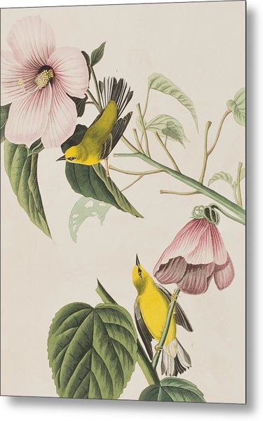 Blue-winged Yellow Warbler  Metal Print