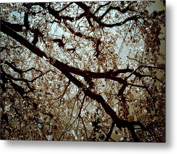 Branch One Metal Print