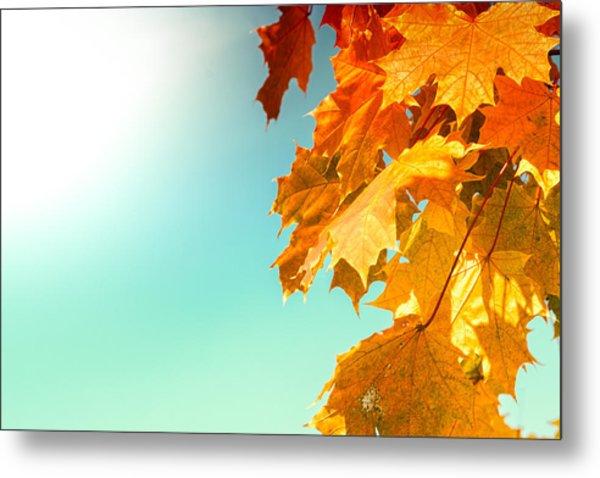 Yellow Autumn White Sun Metal Print