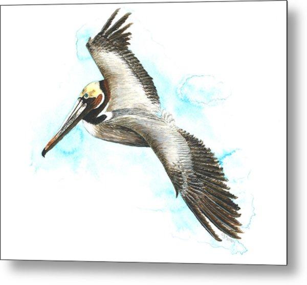 California Brown Pelican Metal Print