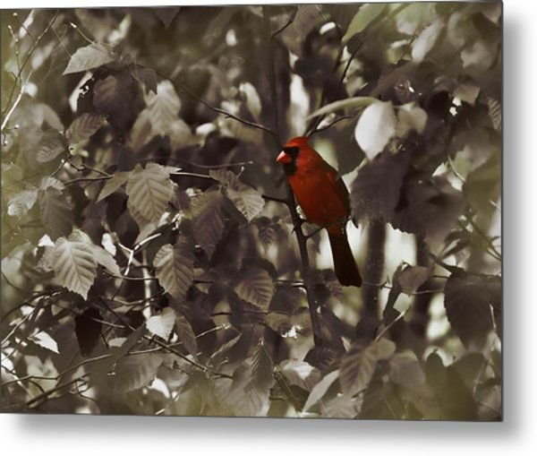 Very Red Cardinal Metal Print by JAMART Photography