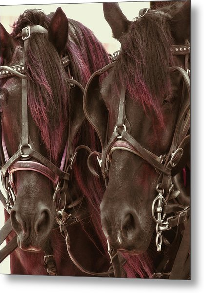Carriage Ponies  Metal Print by Dressage Design