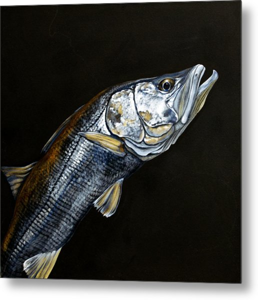 Caught In The Surf Snook Metal Print