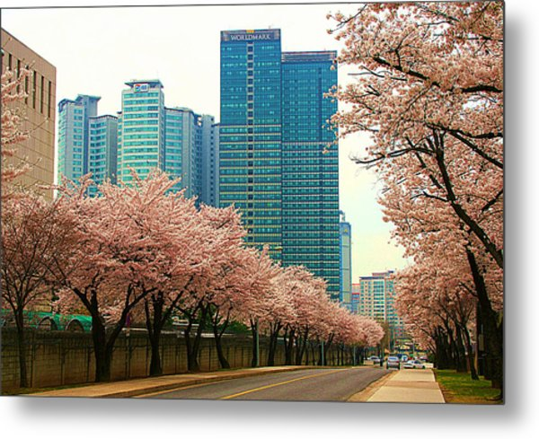 Cherry Blossom Time Metal Print by Michael C Crane