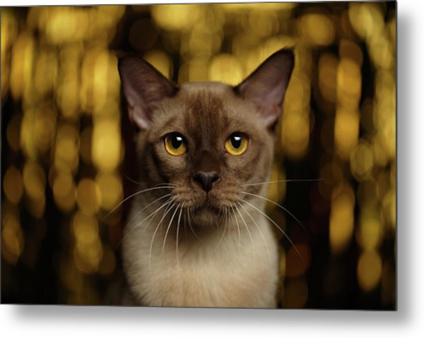 Closeup Portrait Burmese Cat On Happy New Year Background Metal Print