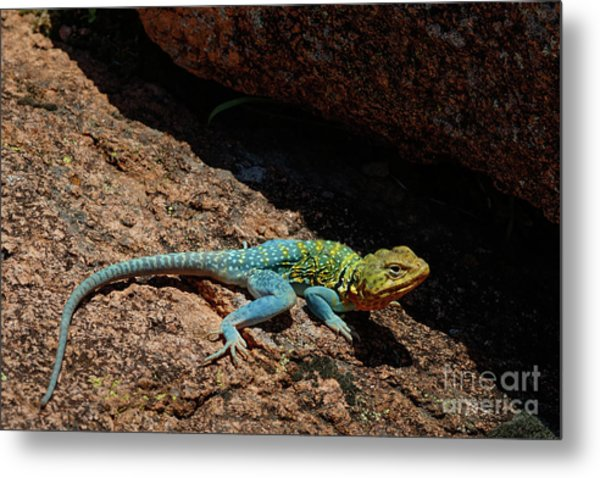 Colorful Lizard II Metal Print
