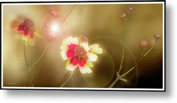 Coreopsis Flowers And Buds Metal Print