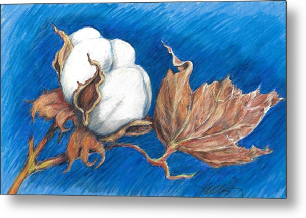 Cotton Picking Blues Metal Print