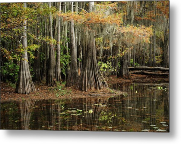 Cypress Trees In Caddo Lake Metal Print