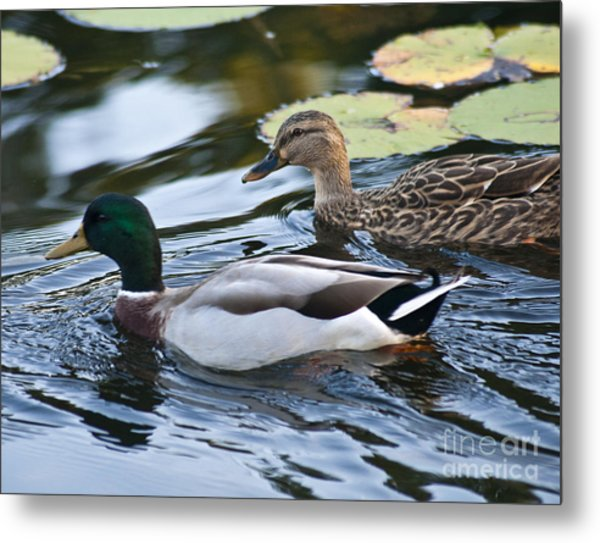 Day On The Pond Metal Print by Alex Garcia