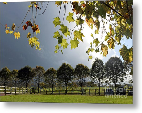 Denbies Vineyard Surrey Uk Metal Print