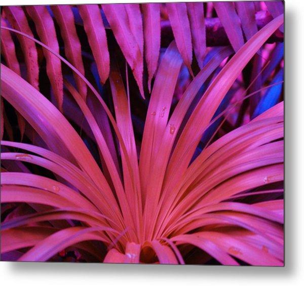 Dew Drop Pink Metal Print by Florene Welebny