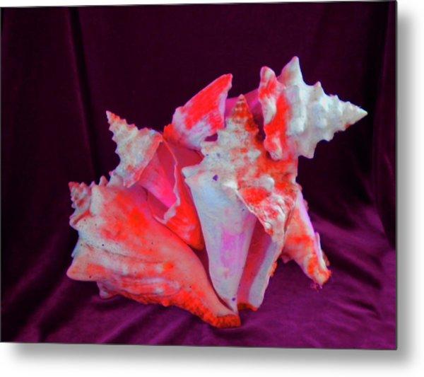 Dog Shell Metal Print by Arlin Jules