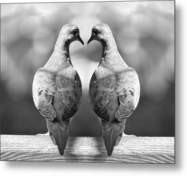 Dove Birds Metal Print