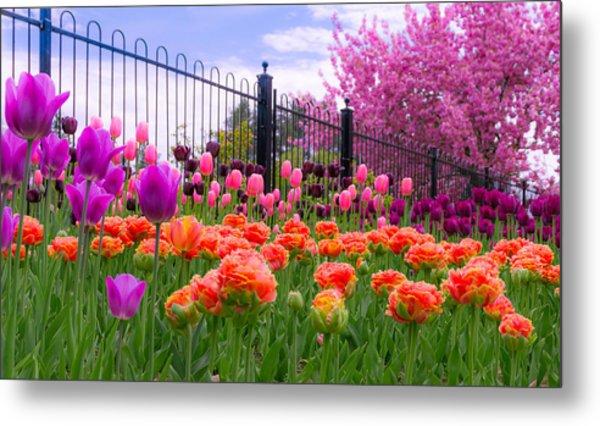 Dreamy Tulip Garden Metal Print