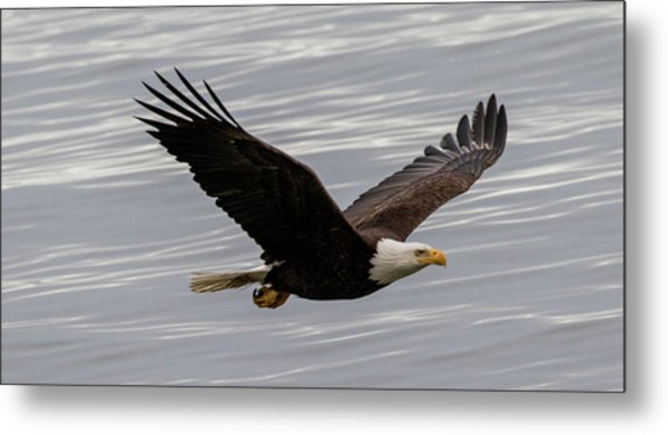 Eagle Soaring Over The Ocean Metal Print