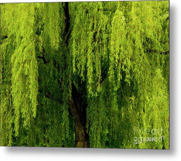 Enchanting Weeping Willow Tree  Metal Print
