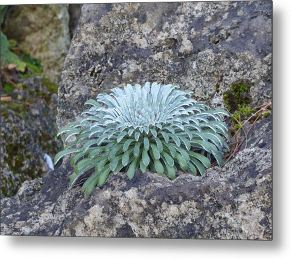 Exotic Plant Metal Print