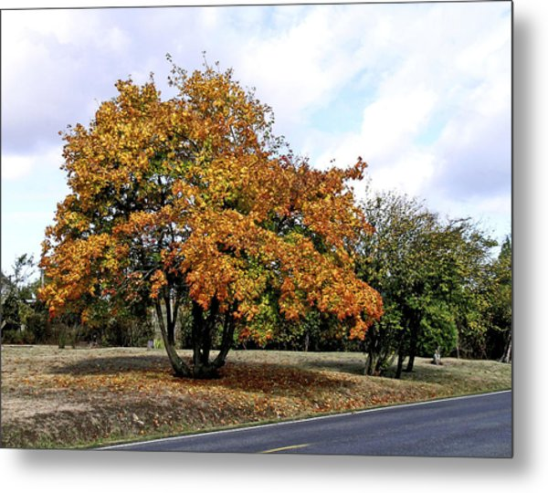 Fall Finery Metal Print by Wilbur Young