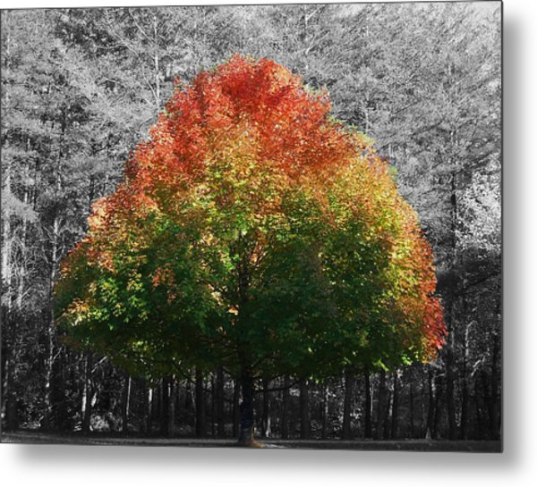 Fall In Bloom Metal Print by Navarre Photos