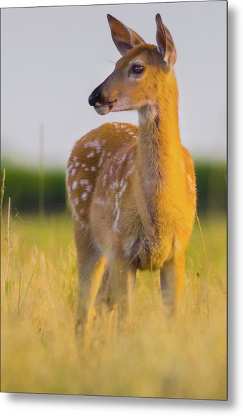 Metal Print featuring the photograph Fawn In Sunlight by John De Bord