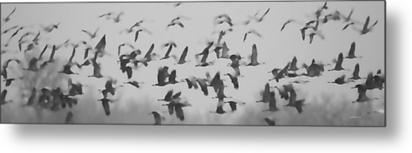 Flight Of The Sandhill Cranes Metal Print