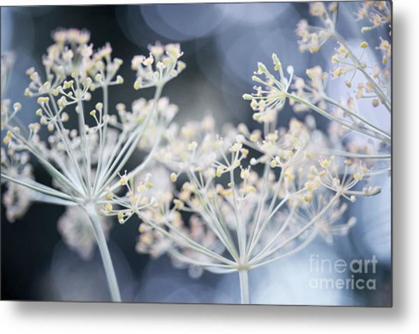 Metal Print featuring the photograph Flowering Dill by Elena Elisseeva