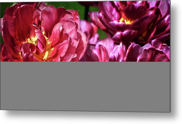 Flowers And Fractals Metal Print