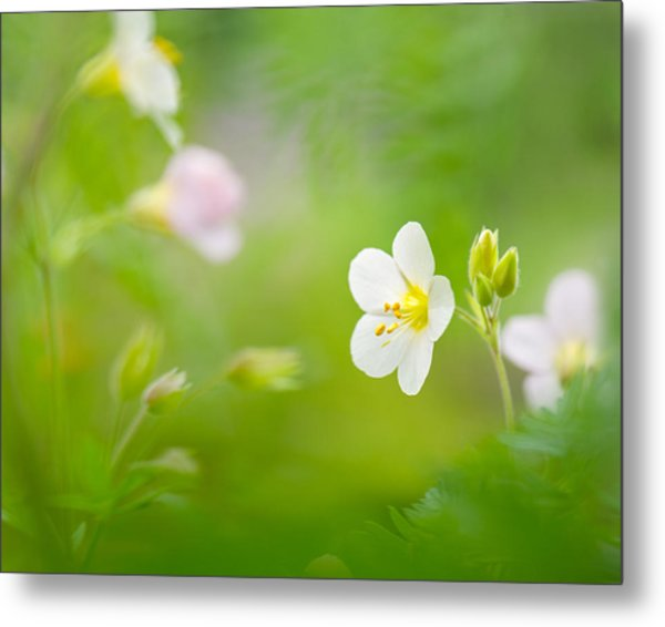 Flowers Whisper Beauty Metal Print