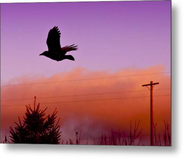 Fly By Metal Print by Chrissy Gibbs