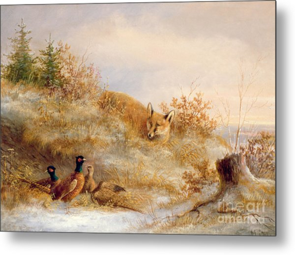 Fox And Pheasants In Winter Metal Print