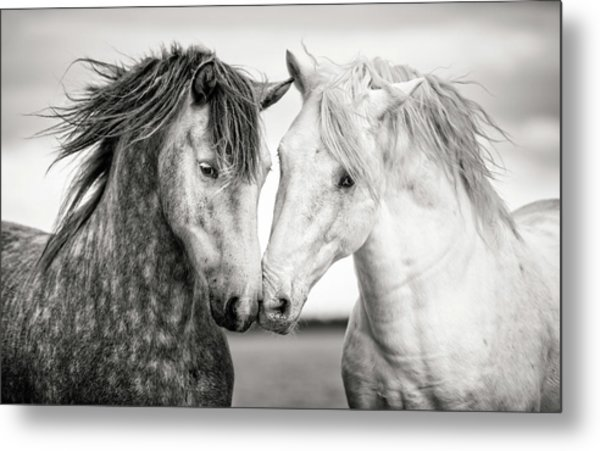 Friends Iv Metal Print by Tim Booth