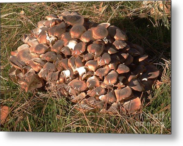 Fungus Metal Print by Chere Lei