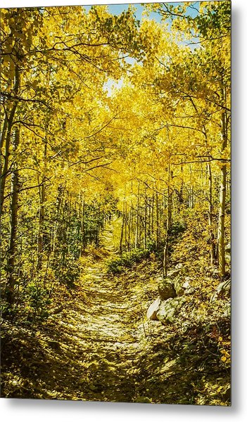 Golden Aspens In Colorado Mountains Metal Print
