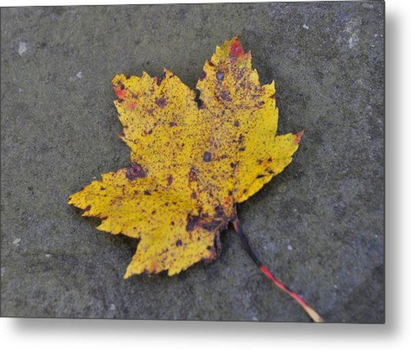Turn To Golden Metal Print by JAMART Photography