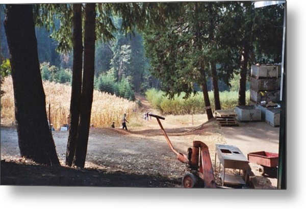 Harvest Time At Apple Hill Metal Print by Dawn Marie Black
