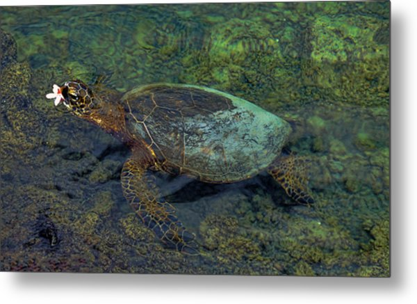 Hawaiian Sea Turtle Metal Print