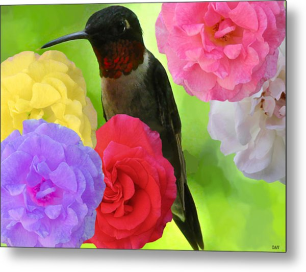 Hummingbird Flower Metal Print by Debra     Vatalaro