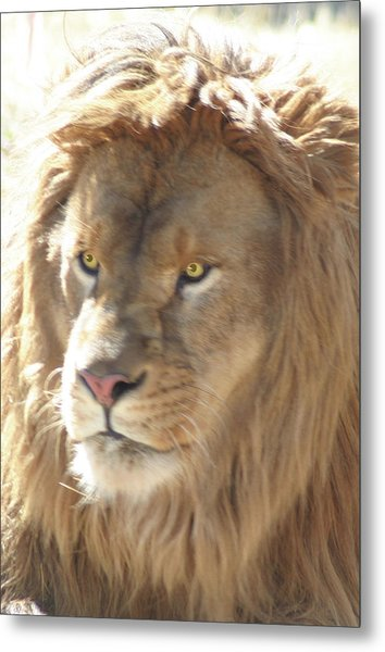 I Am .. The Lion Metal Print