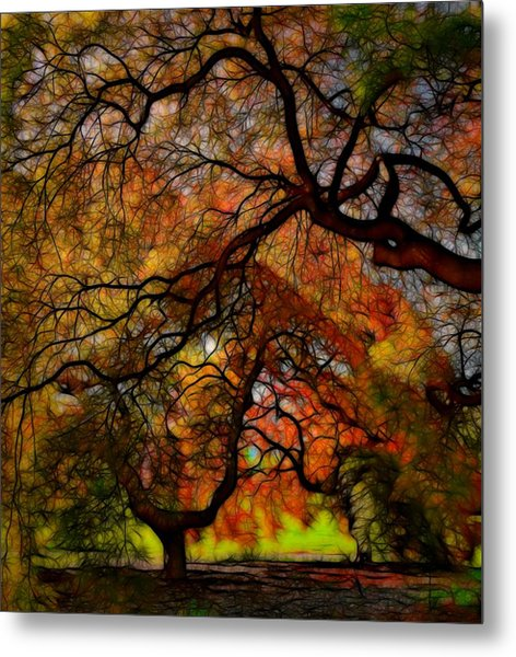 Japanese Maples 2 Metal Print