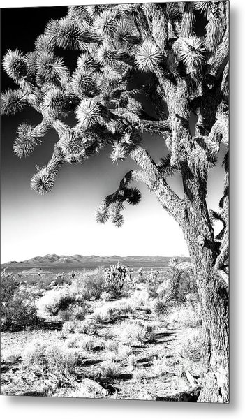 Joshua Tree At Mojave National Preserve In Black And White Metal Print