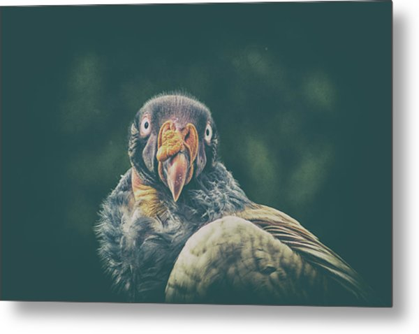 King Vulture Metal Print