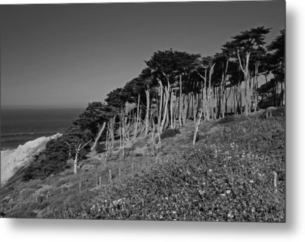 Lands End In San Francisco Metal Print
