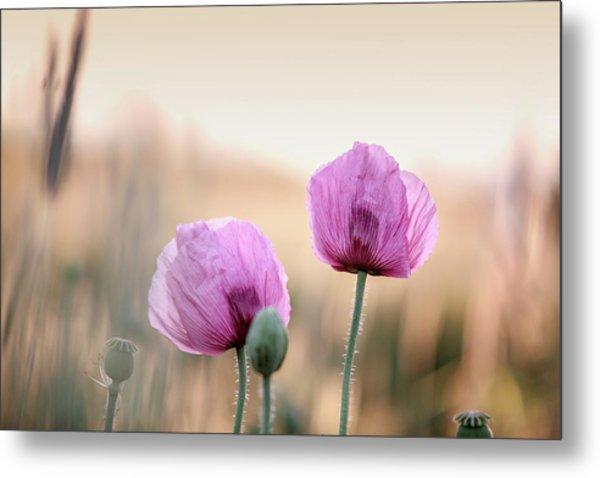 Lilac Poppy Flowers Metal Print
