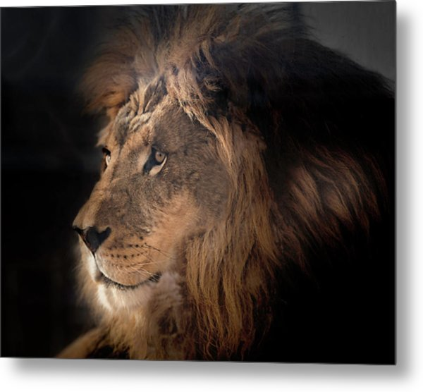 Lion King Of The Jungle Metal Print