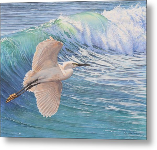 Little Egret Metal Print