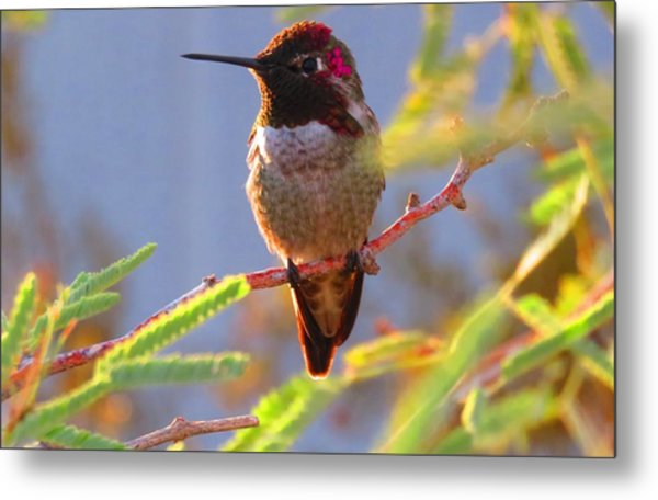 Little Jewel With Wings Sixth Version Metal Print