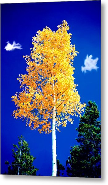 Lone Golden Aspen Metal Print